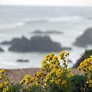 Yellow Flowers above El' Matador by Tom Deters
