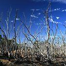 Dead Swamp by Stephen Mitchell