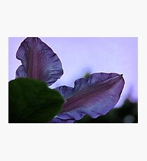 Black Forest Morning Glory Photographic Print