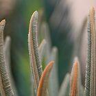 «Pétalos de la flor de la cícada» de mypic