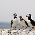 A Puffin Meeting by Lynne Morris