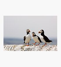A Puffin Meeting Photographic Print