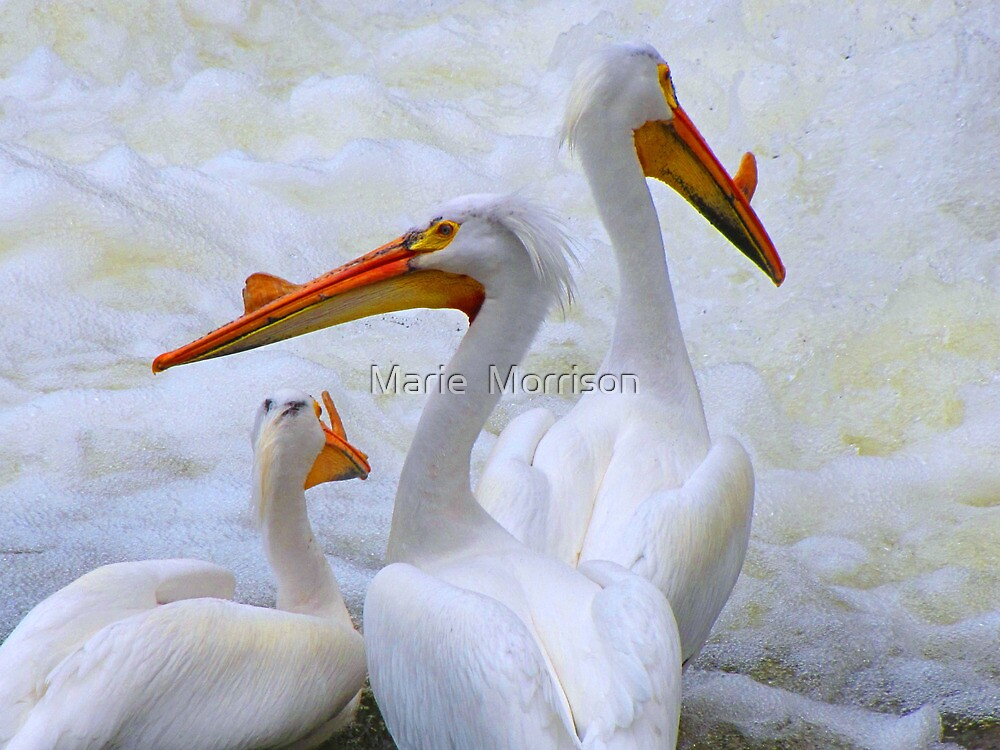 PURE  BEAUTY  by Marie  Morrison