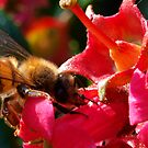 Collecting it's Nectar points by Michael  Addison
