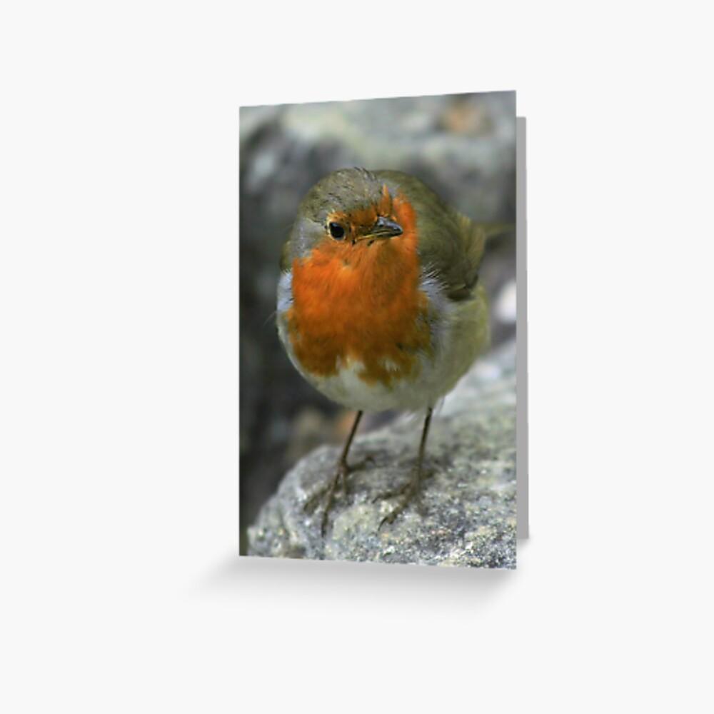 Christmas Robin 1 Greeting Card