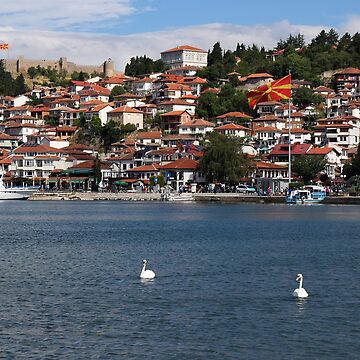 Swans are swimming on Lake Ohrid Macedonia by goceris