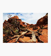 Arch & snag Photographic Print