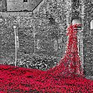 Cascade Of Poppies by Graham Prentice