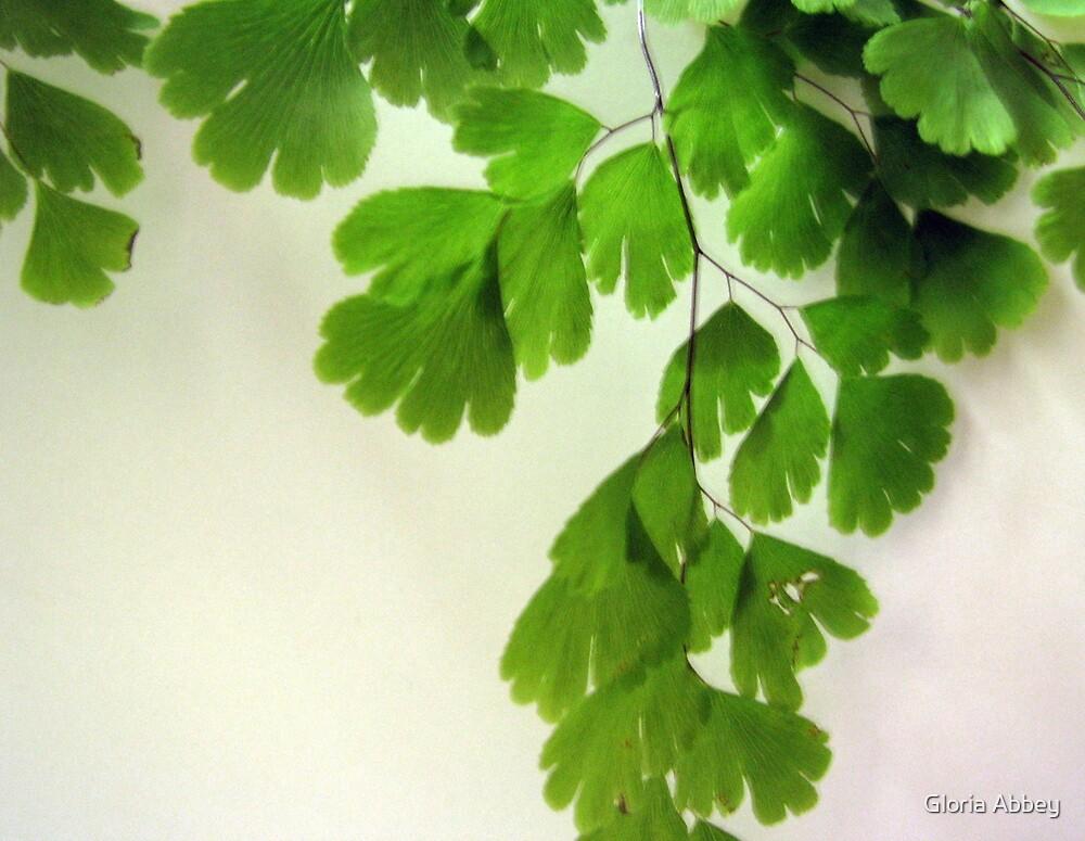 Delicate Fern by Gloria Abbey