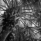 Abundant Palm by AnalogSoulPhoto