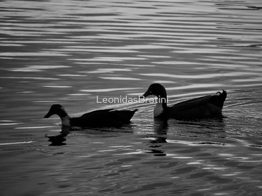 Ducks in a Row by LeonidasBratini