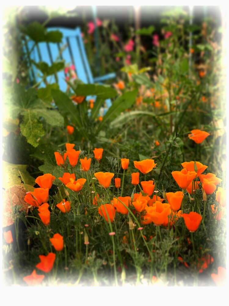 California Poppies In The Garden by douglasewelch