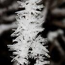 Frost Crystals by tasadam