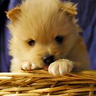 Puppy by Chris Muscat