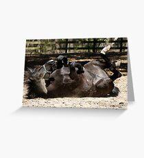Dark Brown Horse Lying Down Greeting Card
