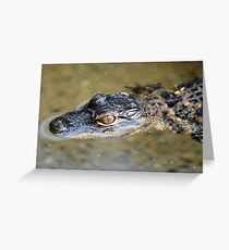 American Alligator Baby Greeting Card