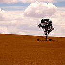 One Tree Alone by John Wallace