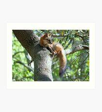 Fox lying in a Tree Art Print