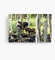 Bull Moose & Baby Moose Canvas Print