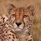 The Stare by Val Saxby