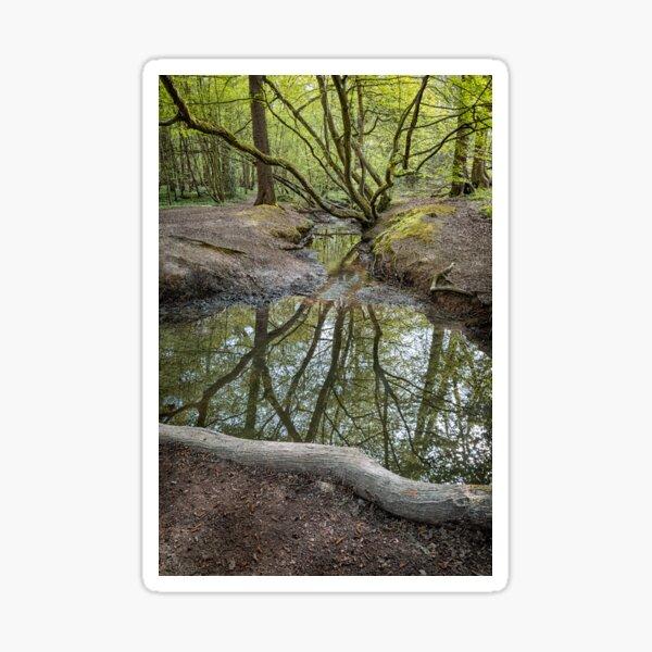 Woodland Reflections Sticker