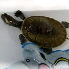 There's a Turtle in the Bathtub - Poetry for Pre-schoolers by PhoenixArt