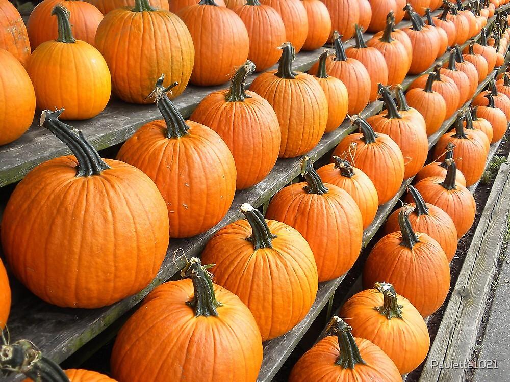 Fresh Produce - Pumpkins by Paulette1021