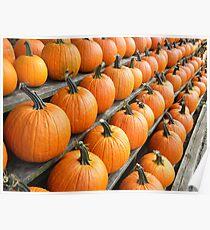 Fresh Produce - Pumpkins Poster