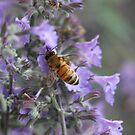 Beauty And The Bee by Deborah  Benoit