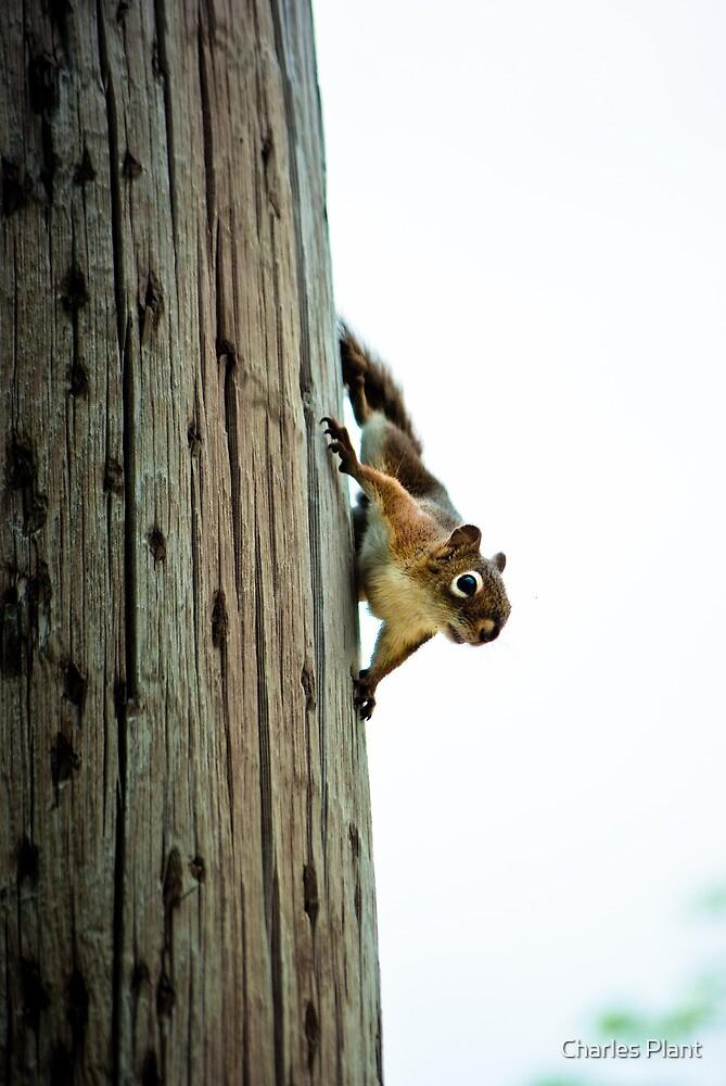 """""""Spider squirrel..spider squirrel.."""" by Charles Plant"""