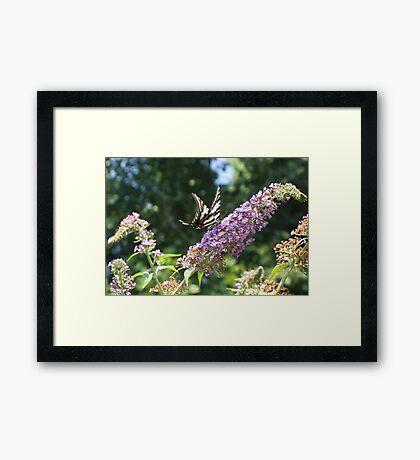 Summer Flutter 4 Framed Print