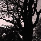 Tree Silhouette by Michael  Addison