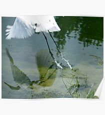 Reflection of an Egret in Flight Poster