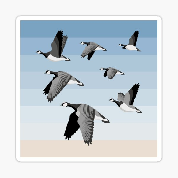 Barnacle goose flock Sticker
