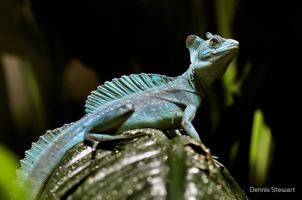 """Green Basilisk Lizard"" by Dennis Stewart | Redbubble"