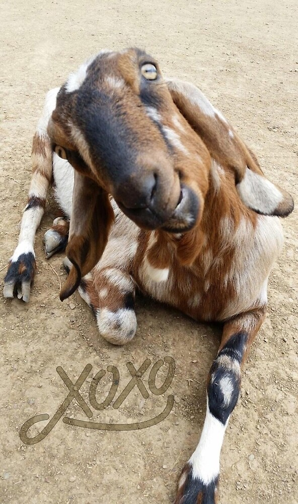 Love Goat by silvergator
