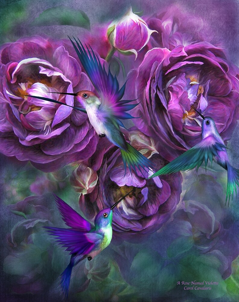 Quot A Rose Named Violette Quot By Carol Cavalaris Redbubble