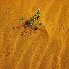 Tracks of life by Peter Doré