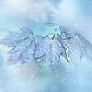 Snowy-Baby-Blätter von Anita Pollak