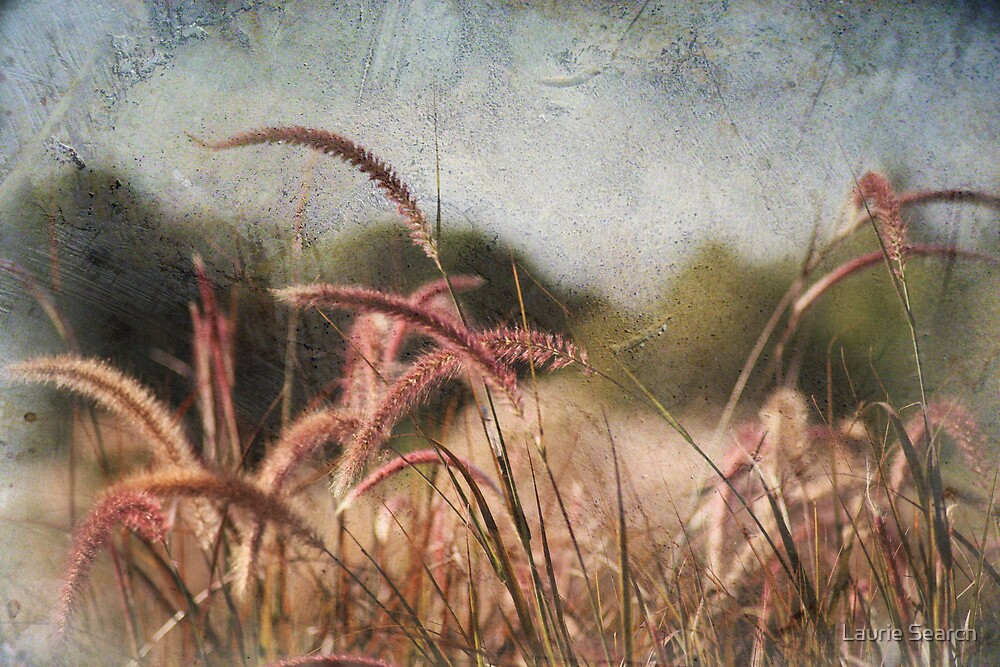 After A Summer's Kiss by Laurie Search