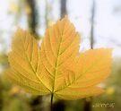 Autumn leaf by aMOONy