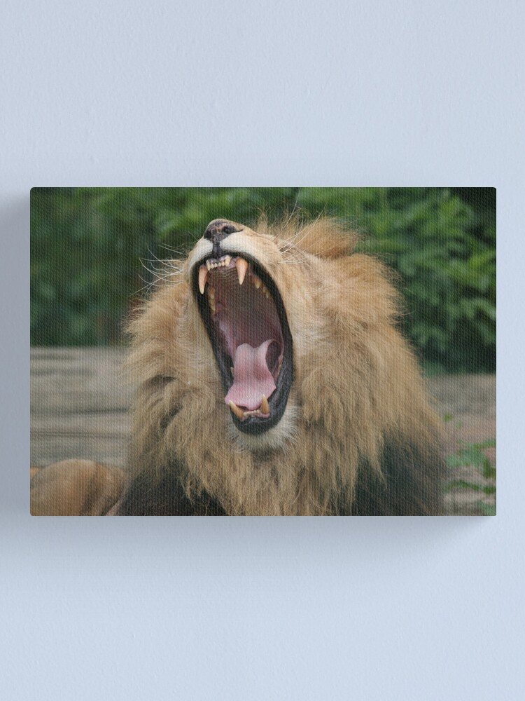 Alternate view of Lion's Roar Canvas Print