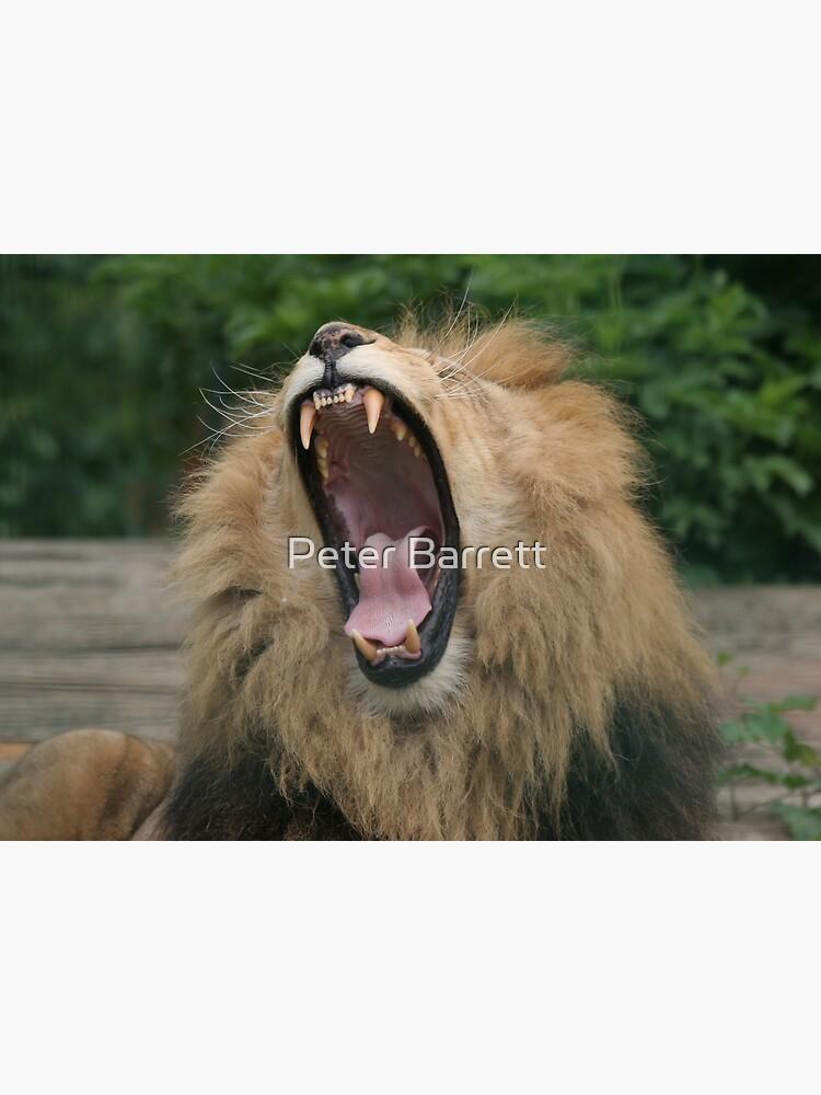 Lion's Roar by hartrockets