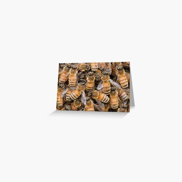 Bee Ensemble Greeting Card
