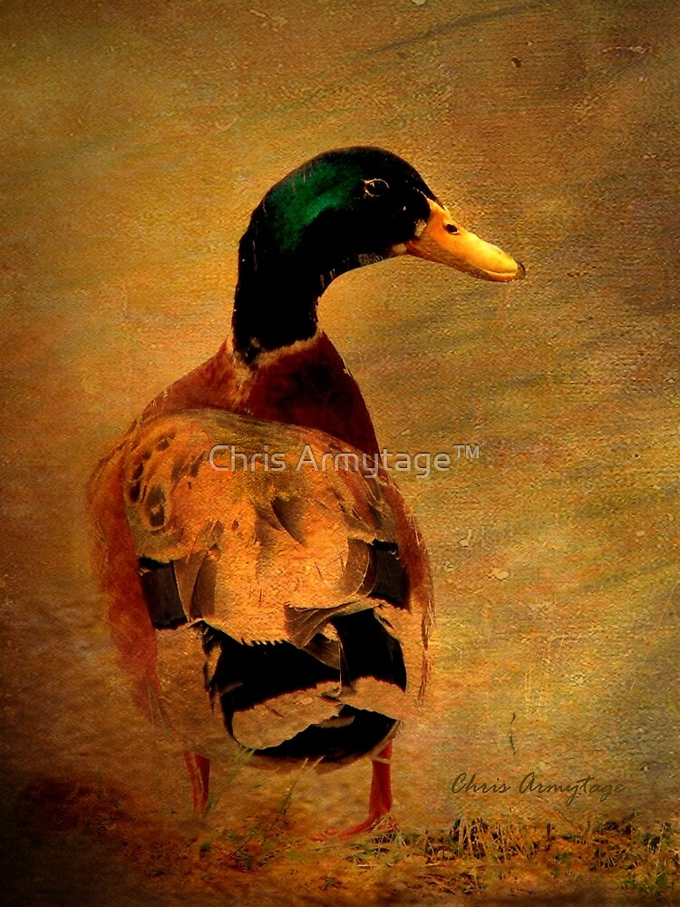 A duck ... by Chris Armytage™