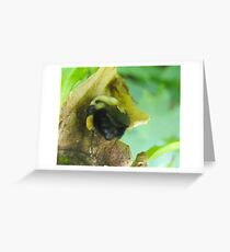 A Bumble of a Bee Greeting Card