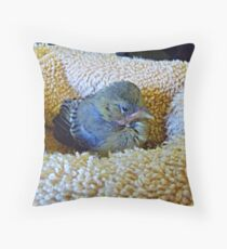 Tweedledee day three. © Throw Pillow