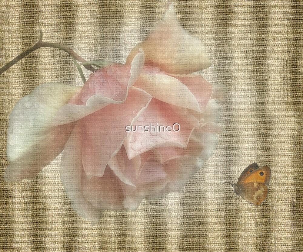 Pale rose by sunshine0
