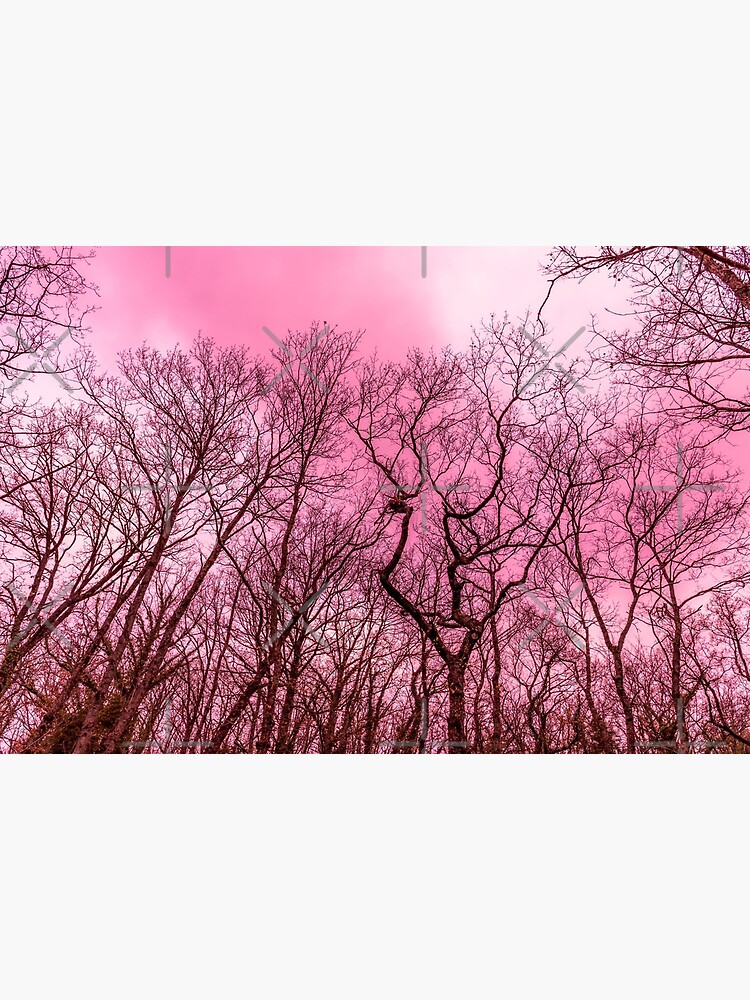 Naked Trees Pink Sky Art Board Print By Naturesight Redbubble