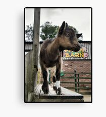 kidding Canvas Print